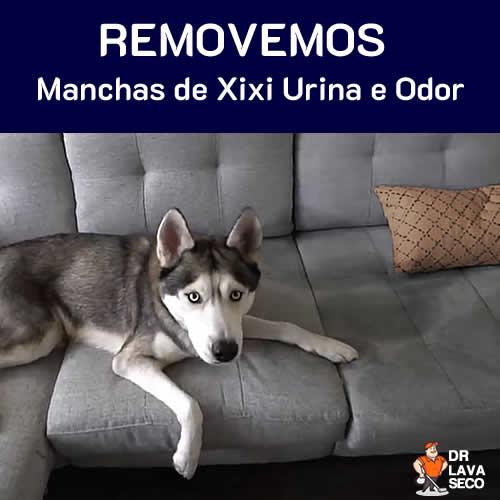Cachorro  fez Xixi no Sofá